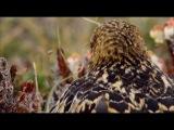 (Часть 6) Дикая природа Скандинавии. Гренландия | Wildes Skandinavien. Greenland (Германия, 2011)